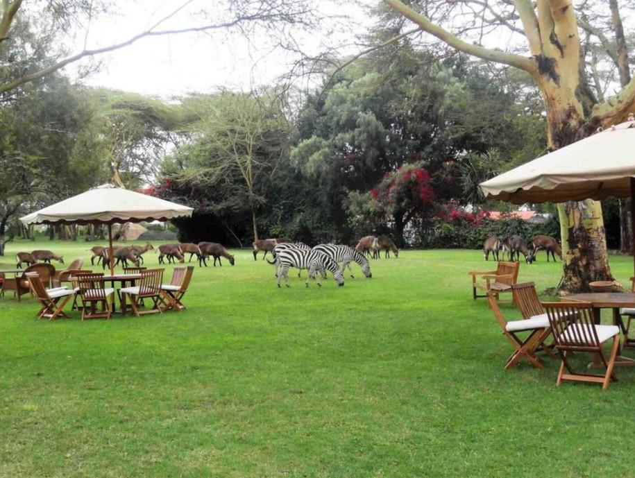 8 удивительных домов и лагерей для сафари в Кении