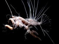 Самые необычные лягушки в мире: Топ-10