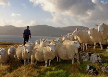Сельское хозяйство Великобритании